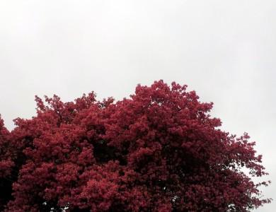 Colores Del Invierno