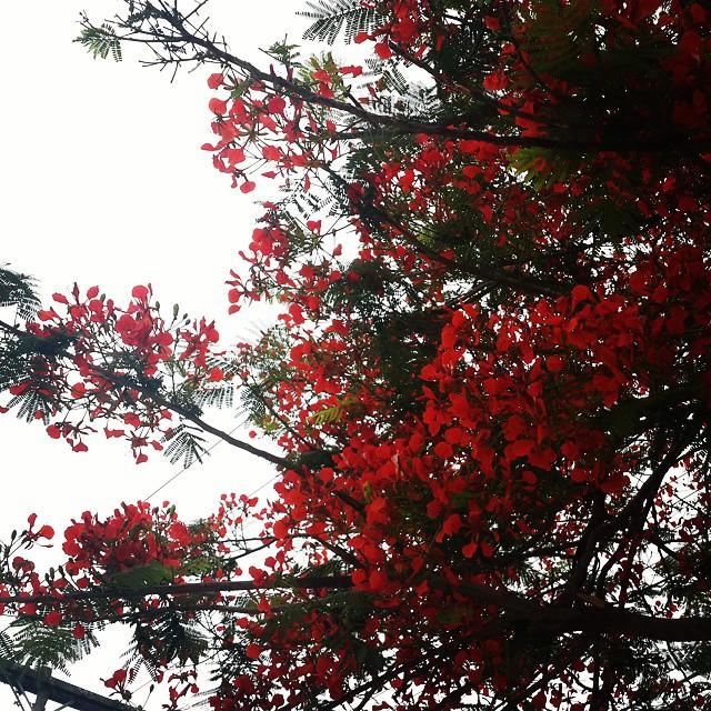 En #Camiri disfrutando de los geniales colores de esta #Pajarilla